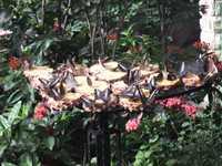 蝶のかたまりの写真