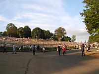 コスモスの丘の写真